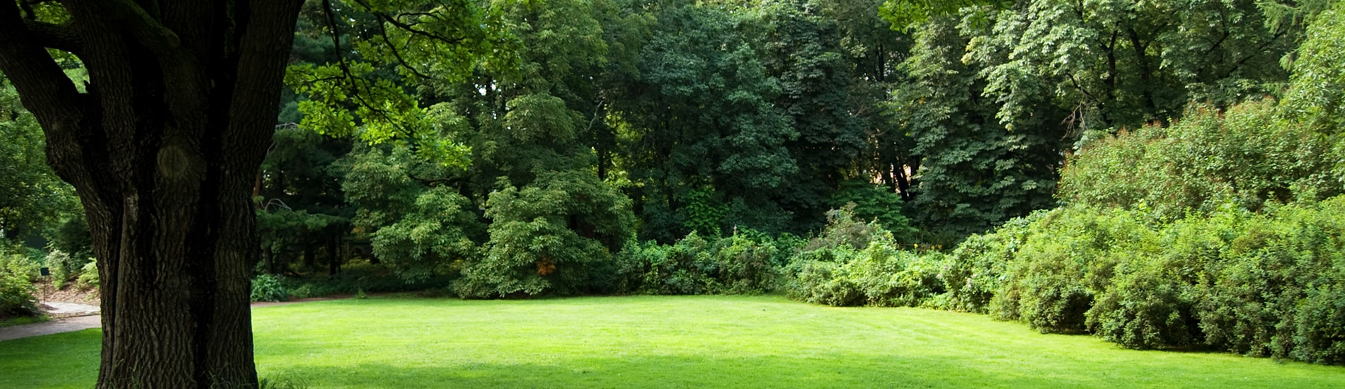 tree-services-slider1