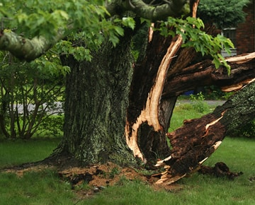 Example of Storm damage to Tree