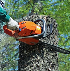 Arborist using sectional felling to remove a tree