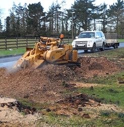 Stump Grinding equipment Tree Surgery Services