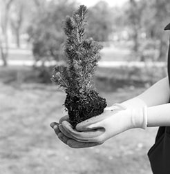 Tree Planting Service at Branching Out Tree Care